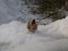 Tengelic hófürdőzik