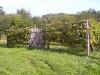 Ehető kerítés a hegyen