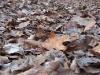 Avar az őszi erdőn